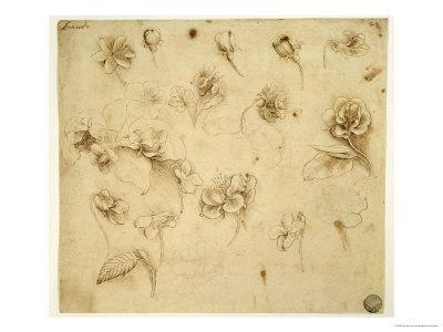 Study of Flowers - Giclee Print