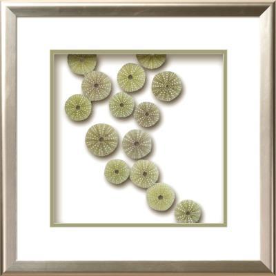 Urchin Tidepool I - Dimensional Product