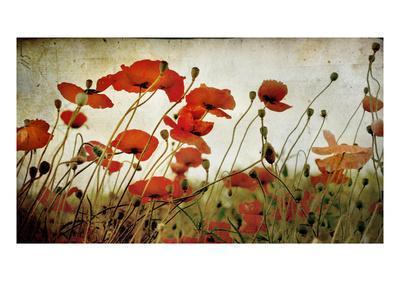 Orange Flower Patch - Photographic Print