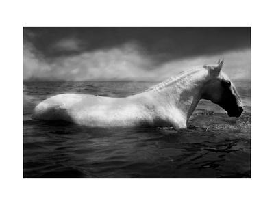 White Horse Swimming - Stretched Canvas Print
