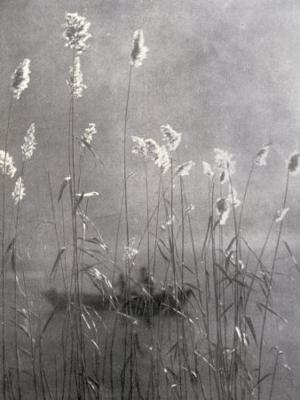 Wild Flowers Growing on Te Banks of a Pond - Photographic Print