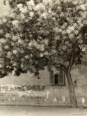 The Flowering Tree - Photographic Print