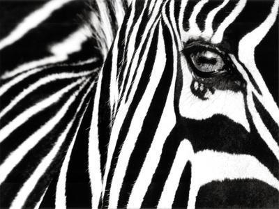 art com african animals by rachelmccutcheon an art collection
