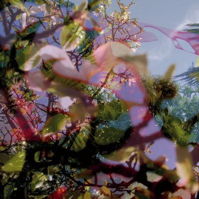 Vegetaux 11, 2008 - Serigraph