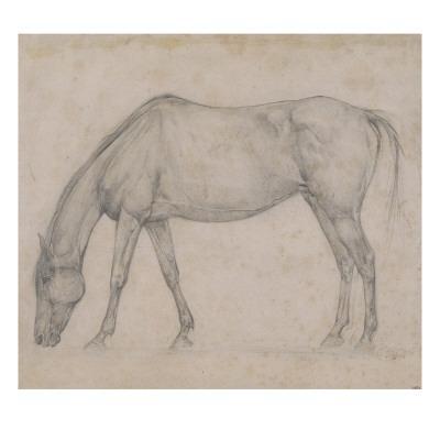 Etude de cheval - Giclee Print