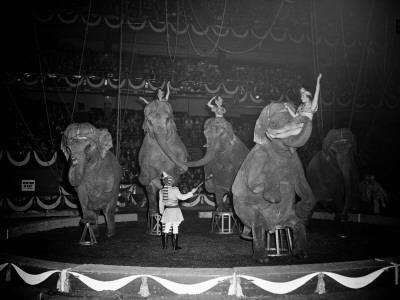 Circus Elephants - Photographic Print