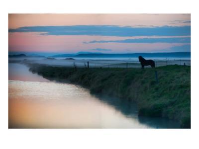 The Silent Horse in the Fog - Premium Photographic Print