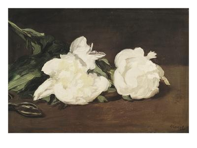 Branch of White Peonies and Secateurs - Giclee Print