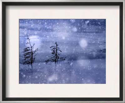 Snow Storm - Framed Art Print