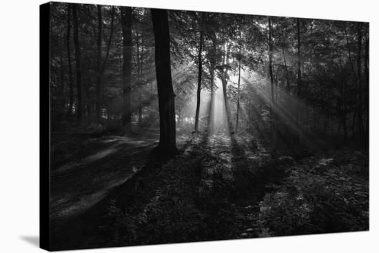 A Sunny Morning-Leif Londal-Stretched Canvas Print