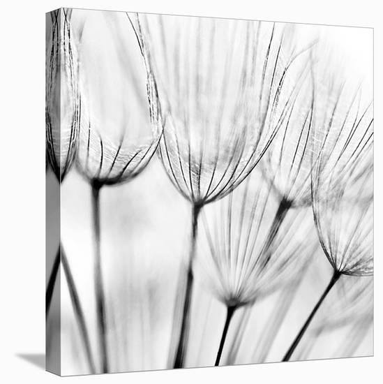 Abstract Dandelion Flower--Stretched Canvas Print