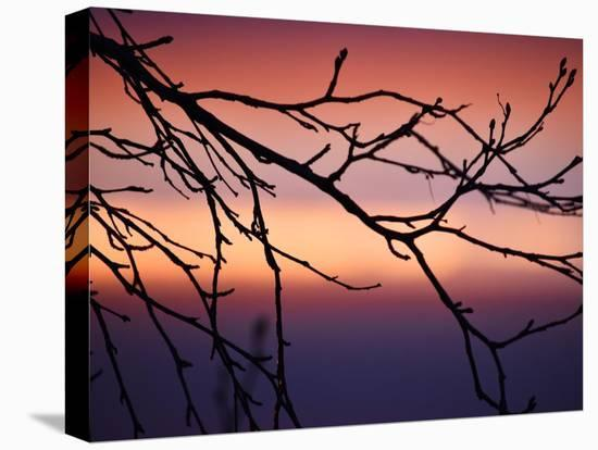 Abstract Sunset-Savanah Plank-Stretched Canvas Print
