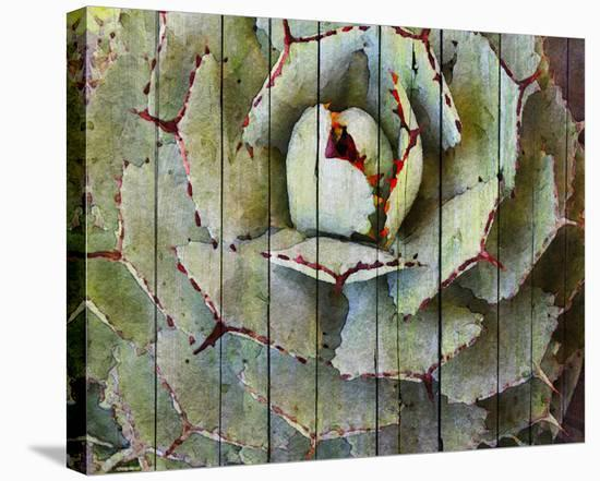 Agave--Stretched Canvas Print