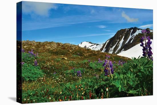 Alaska USA V--Stretched Canvas Print