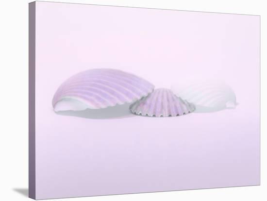Artful Notions 153-Murray Bolesta-Stretched Canvas Print