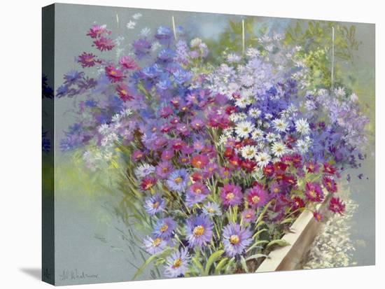 As Far as the Eye Can See-Nel Whatmore-Stretched Canvas Print
