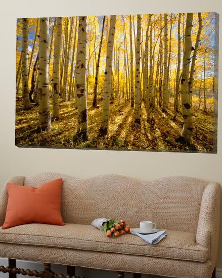 Aspen Trees in Autumn-John Eastcott & Yva Momatiuk-Loft Art