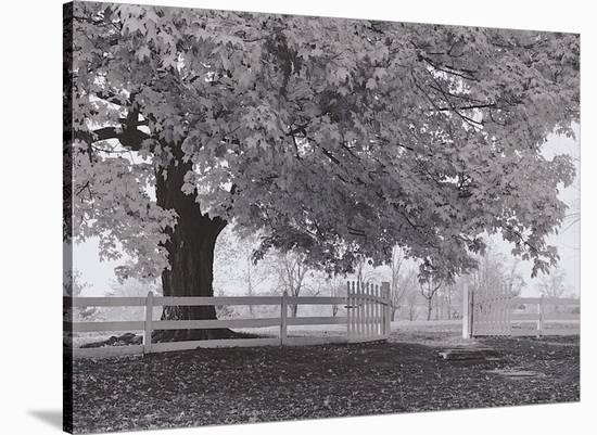 Autumn Morning-Jim Morris-Stretched Canvas Print