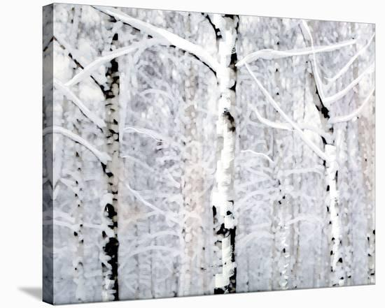 Birch Forest Winter-Parker Greenfield-Stretched Canvas Print