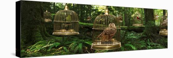 Birdcage Forest-Richard Desmarais-Stretched Canvas Print