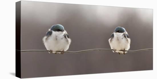 Birds On A Wire-Lucie Gagnon-Stretched Canvas Print