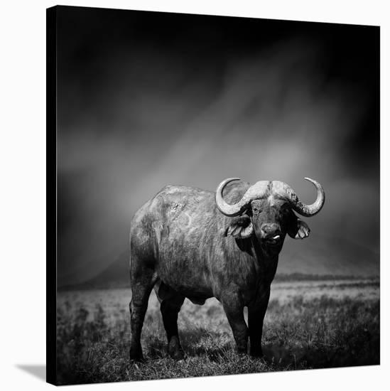 Black and White Image of A Buffalo-byrdyak-Stretched Canvas Print