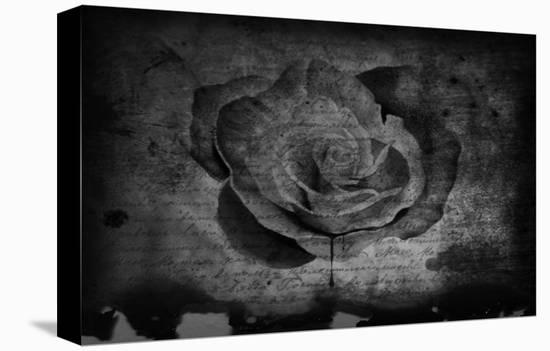 Bleeding Rose-Blake Votaw-Stretched Canvas Print