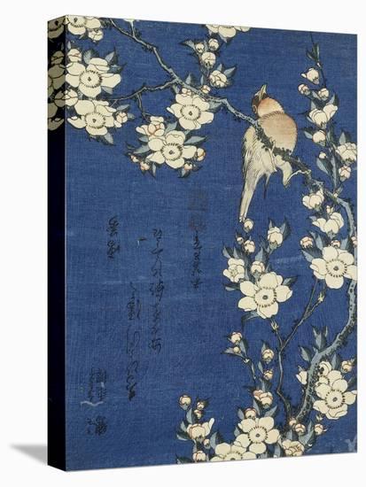 Bouvreuil et cerisier-pleureur-Katsushika Hokusai-Stretched Canvas Print