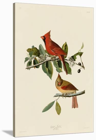 Cardinal Grosbeak Stretched Canvas Print John James Audubon Art Com
