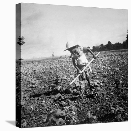 Child of Black Tenant Farmer Family Using Hoe While Working in Cotton Field-Dorothea Lange-Stretched Canvas Print