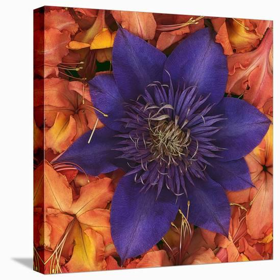 Clematis and Azeleas--Stretched Canvas Print