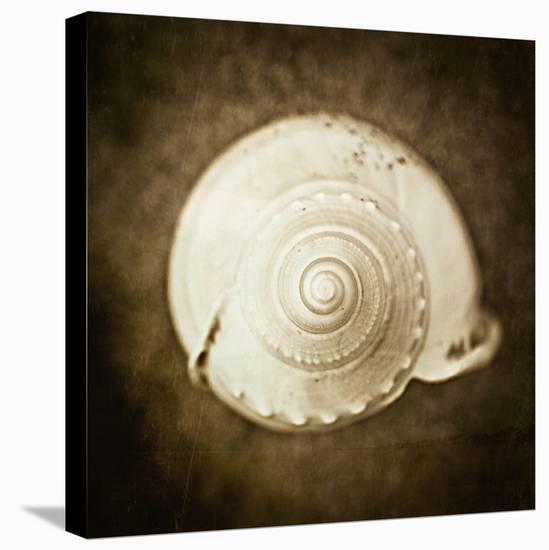 Cochlear I-Ryan Hartson-Weddle-Stretched Canvas Print