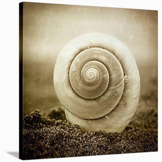 Cochlear III-Ryan Hartson-Weddle-Stretched Canvas Print