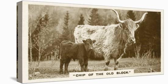 Comic Animals, Chip Of The Old Block (b/w photo)-English Photographer-Stretched Canvas Print