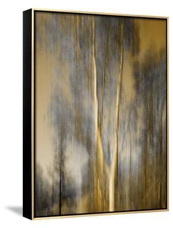 Composited Image of Trees-Diane Miller-Framed Canvas Print