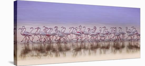 Comrades In Color-Ahmed Thabet-Stretched Canvas Print