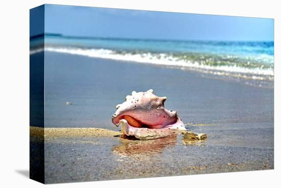 Conch-Jan Michael Ringlever-Stretched Canvas Print