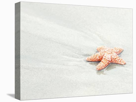 Coral Starfish--Stretched Canvas Print