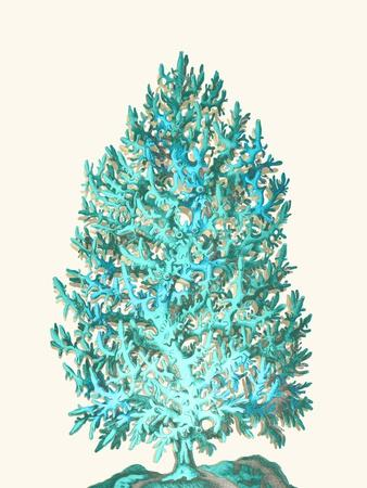 Coral Tree Turquoise on Cream-Fab Funky-Stretched Canvas Print