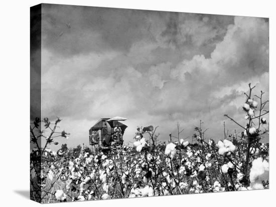 Cotton Picking Machine Doing the Work of 25 Field Hands on Large Farm in the South-Margaret Bourke-White-Stretched Canvas Print