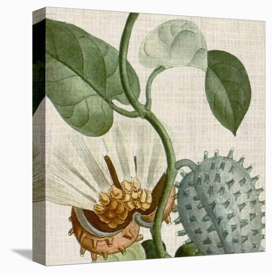 Cropped Turpin Tropicals II-Vision Studio-Stretched Canvas Print