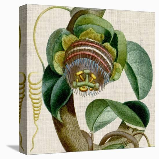 Cropped Turpin Tropicals IV-Vision Studio-Stretched Canvas Print