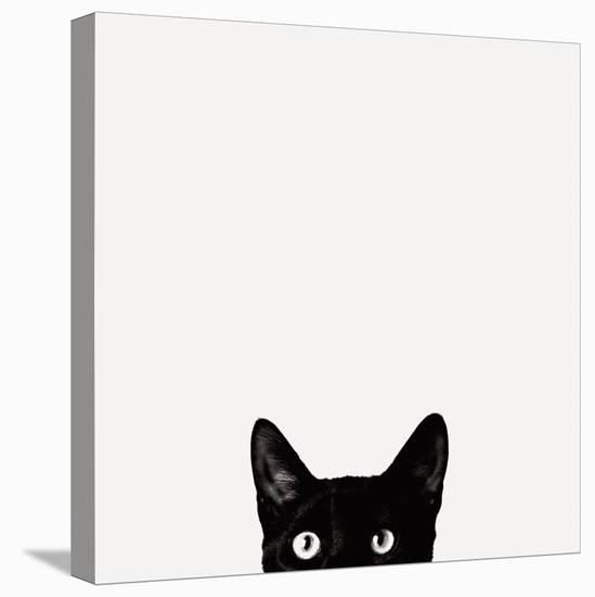 Curiosity-Jon Bertelli-Stretched Canvas Print