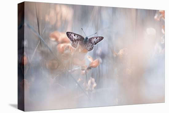Dakinis Are Watching Over Us-Fabien Bravin-Stretched Canvas Print