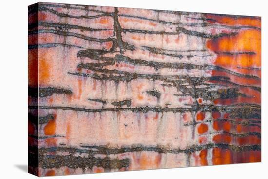 Details of rust and paint on metal.-Zandria Muench Beraldo-Stretched Canvas Print