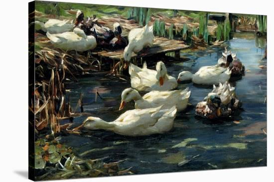 Ducks in a Pool-Alexander Koester-Stretched Canvas Print