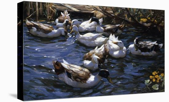 Ducks in the Reeds under the Boughs-Alexander Koester-Stretched Canvas Print