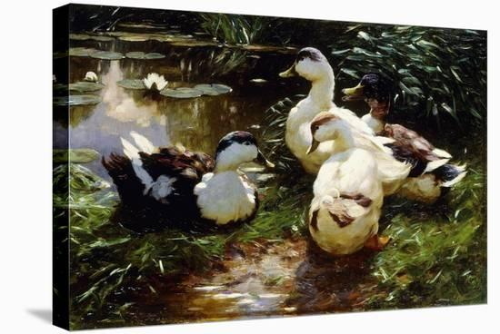 Ducks on a Riverbank-Alexander Koester-Stretched Canvas Print