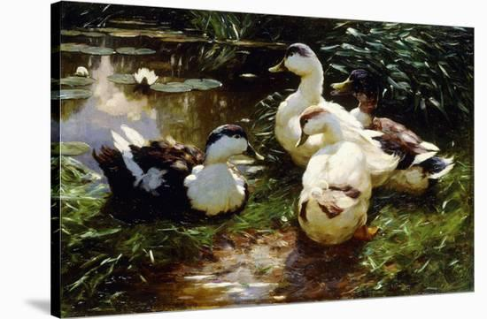 Ducks on a Riverbank-Alexander Koester-Stretched Canvas