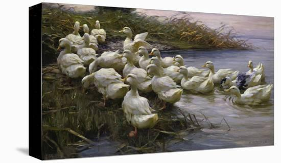 Ducks on the Lakeshore-Alexander Koester-Premier Image Canvas